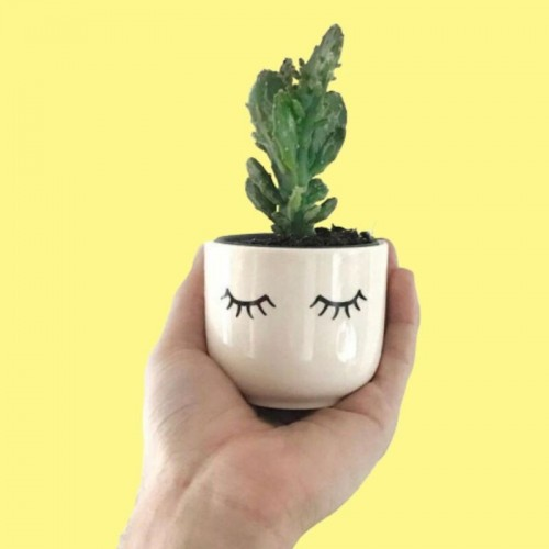 Mini Eyes Planter